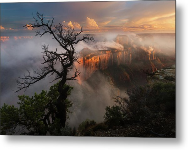 In The Mist Metal Print by Adam Schallau