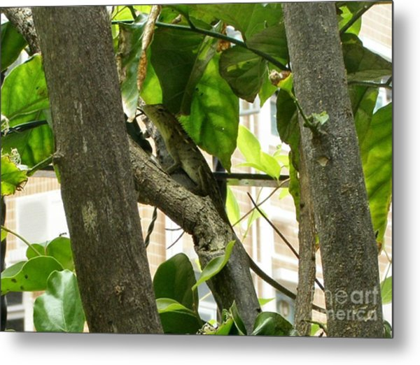 In The Shade Metal Print by Kathy Daxon