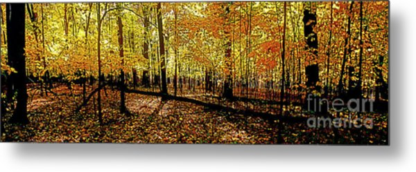 In The The Woods, Fall  Metal Print