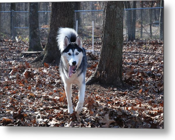 In The Wind Metal Print by Clay Peters Photography