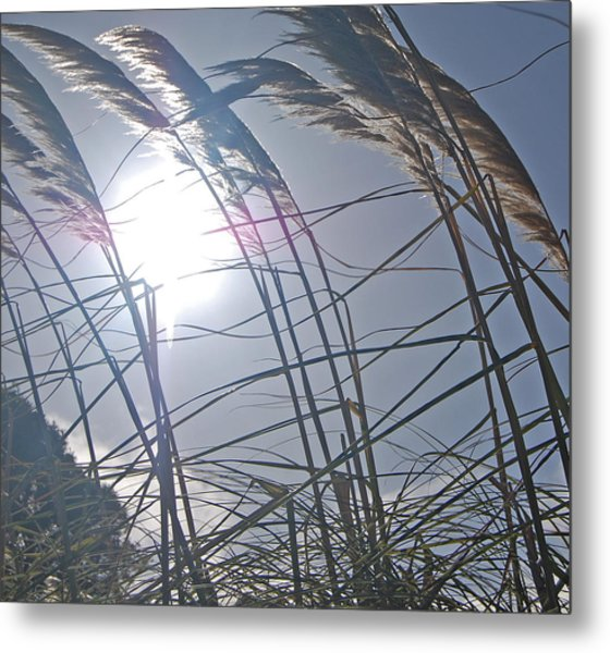 In The Wind Metal Print by Jean Booth