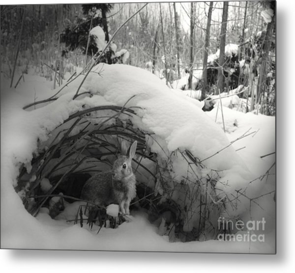 In Wonderland Metal Print