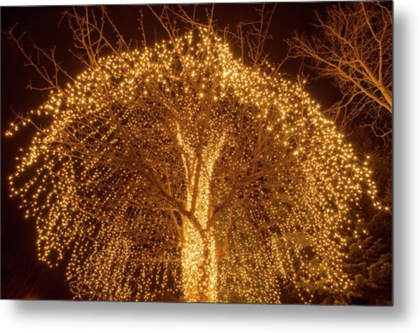Incandescent Branches  Metal Print