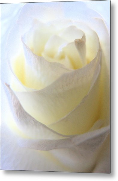Incandescent Rose Metal Print