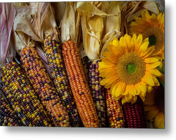 Indian Corn And Sunflowers Metal Print