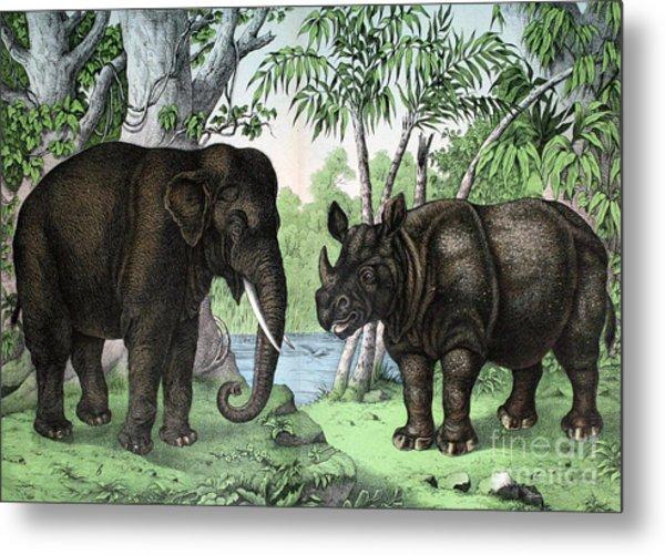 Indian Elephant And Rhinoceros Metal Print