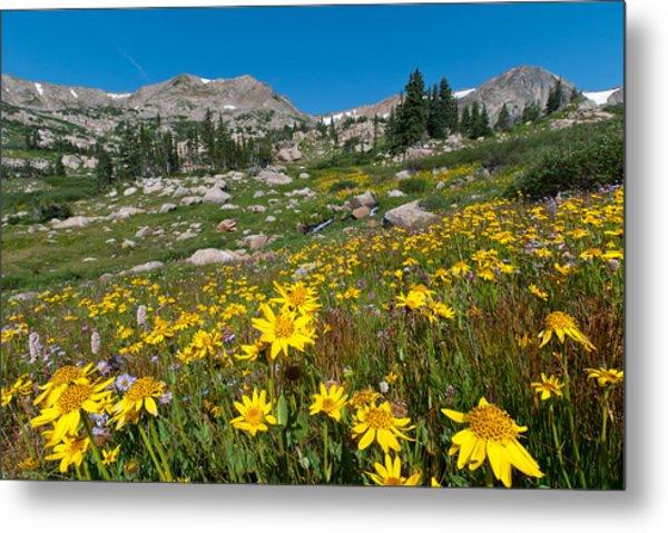 Indian Peaks Summer Wildflowers Metal Print