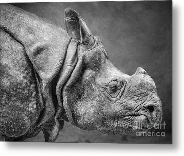 Indian Rhino Profile Metal Print