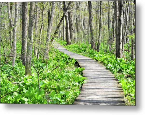 Indiana Dunes Great Green Marsh Boardwalk Metal Print