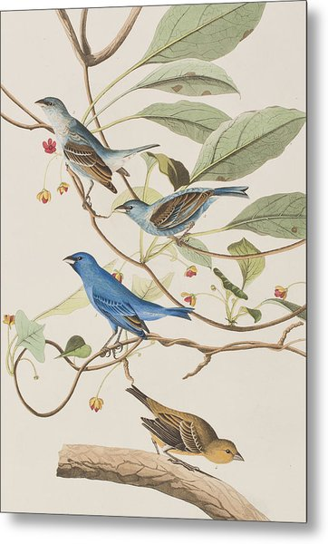 Indigo Bird Metal Print