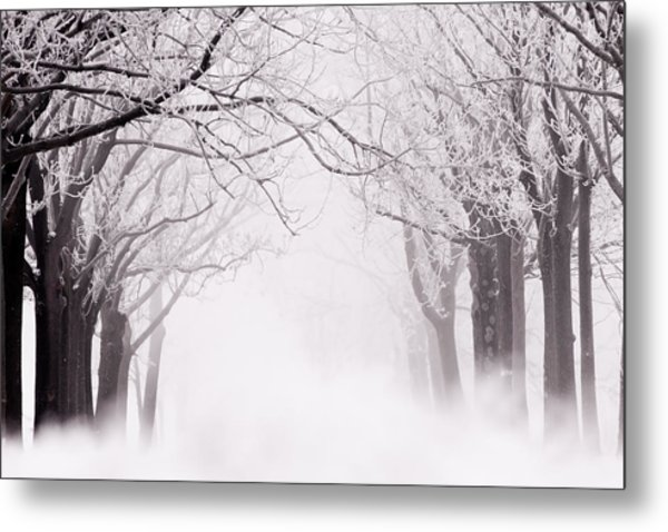 Infinity - Trees Covered With Hoar Frost On A Snowy Winter Day Metal Print