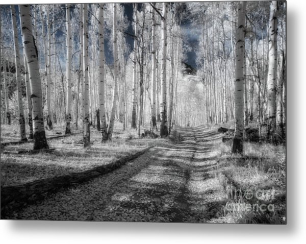 Infrared Aspens Metal Print