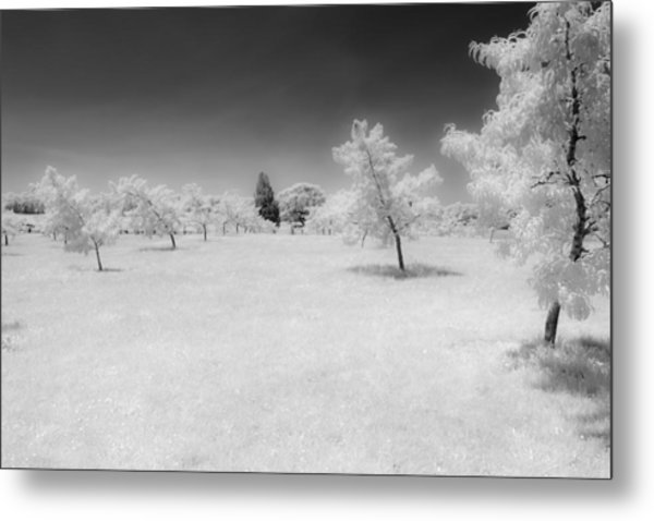 Infrared Peach Orchard Metal Print