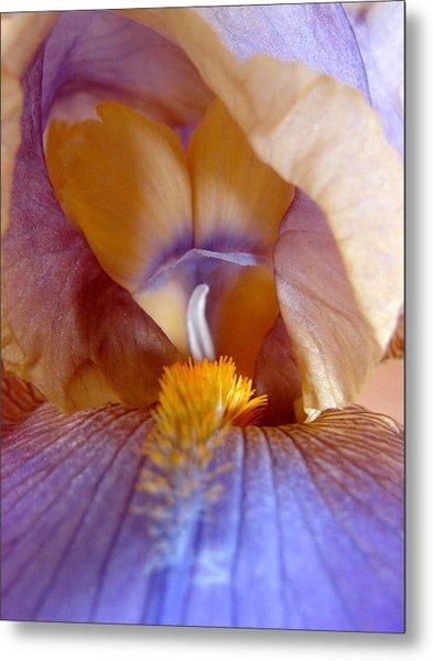 Inner Iris Series, Yellow Purple Metal Print