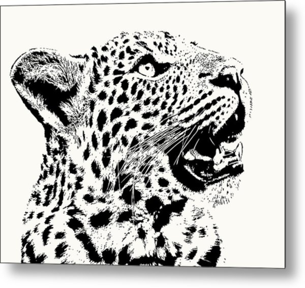 Inquisitive Young Leopard Looking Up Metal Print
