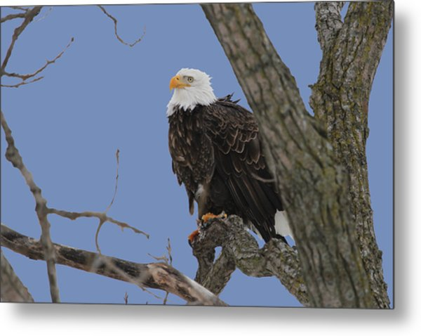 Inqusitive Look Metal Print by Dave Clark