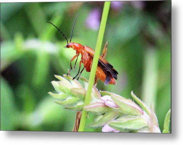 Insect Metal Print