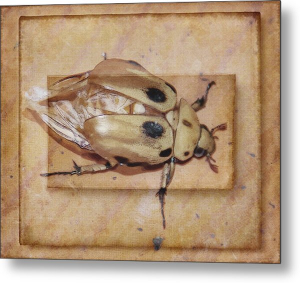 Insect On Wooden Board Metal Print
