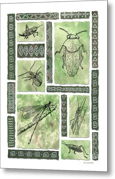 Insects Of Hawaii I Metal Print