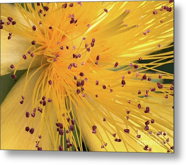 Inside A Flower - Favorite Of The Bees Metal Print