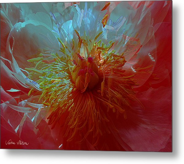 Inside The Heart Of A Peonie Metal Print