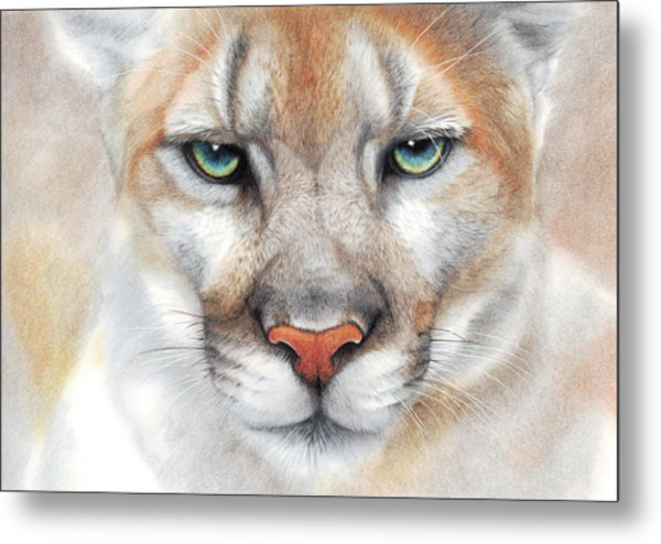 Intensity - Mountain Lion - Puma Metal Print