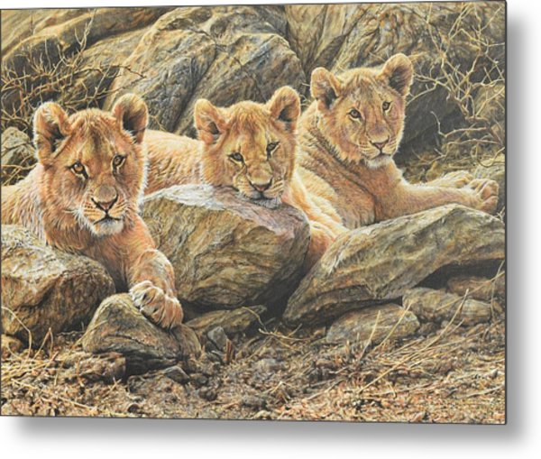 Interrupted Cat Nap Metal Print