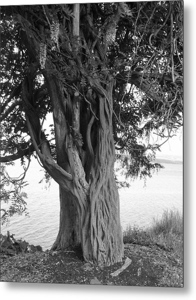 Intertwined For Life Black And White Metal Print by Jennifer Compton