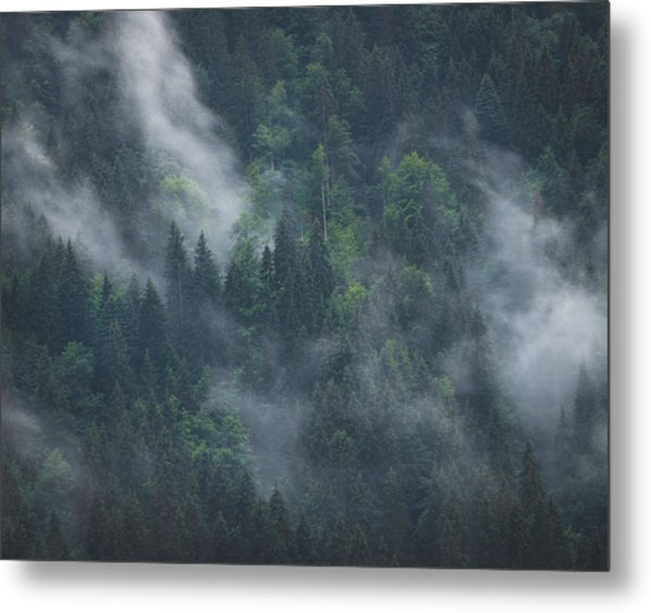 Into Deep Forest Metal Print