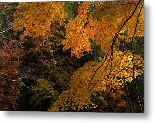 Into The Fall Metal Print