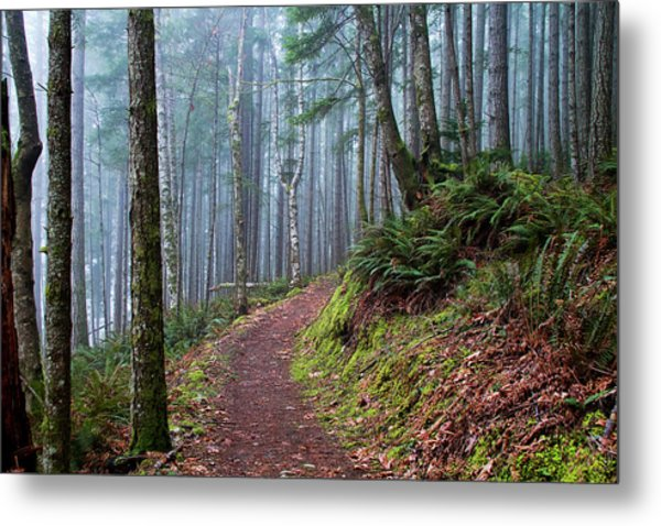 Into The Misty Forest Metal Print