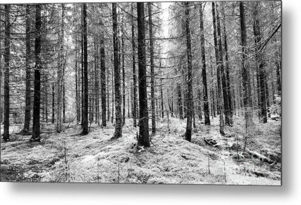 Into The Monochrome Woods Metal Print