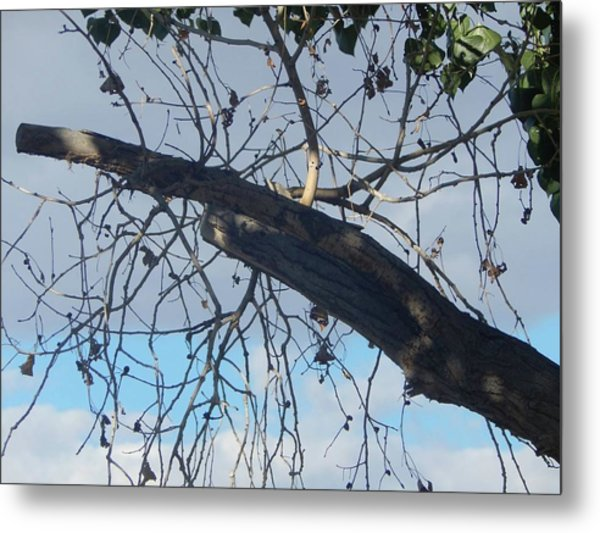 Tree Leaves Into The Sky Metal Print