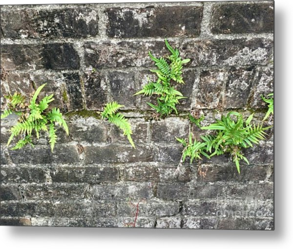 Intrepid Ferns Metal Print