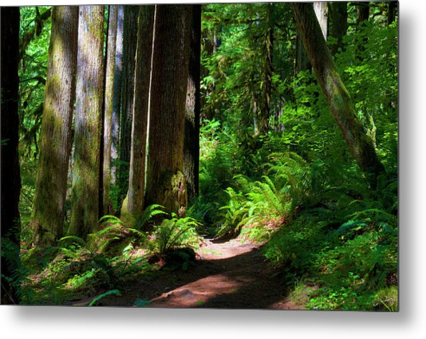 Inviting Hike Metal Print