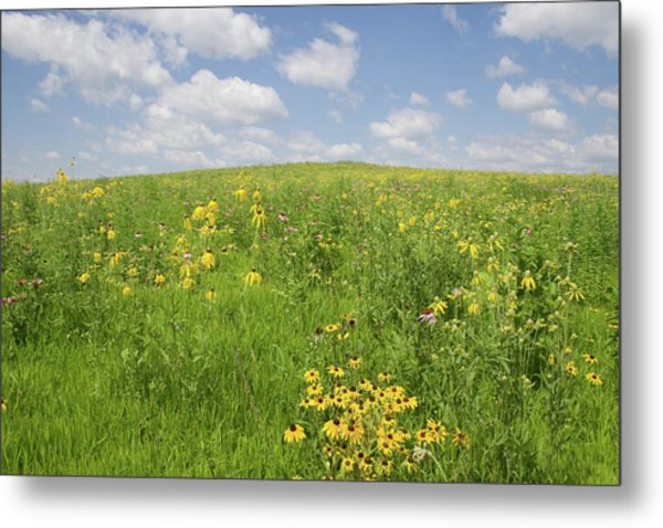 Iowa Summer Flowers I Metal Print