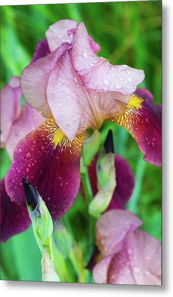 Iriis After Rain Metal Print
