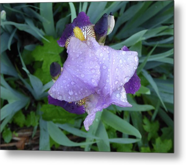 Iris After The Rain IIi Metal Print