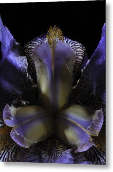 Iris Aglow Metal Print