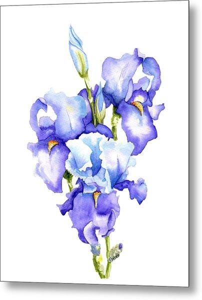 Iris Blooms Metal Print