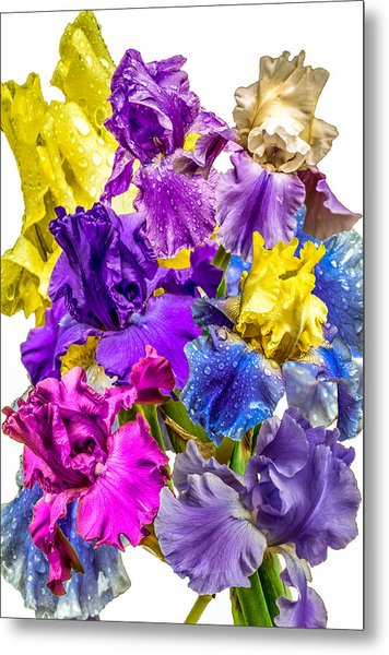 Iris Collection Metal Print