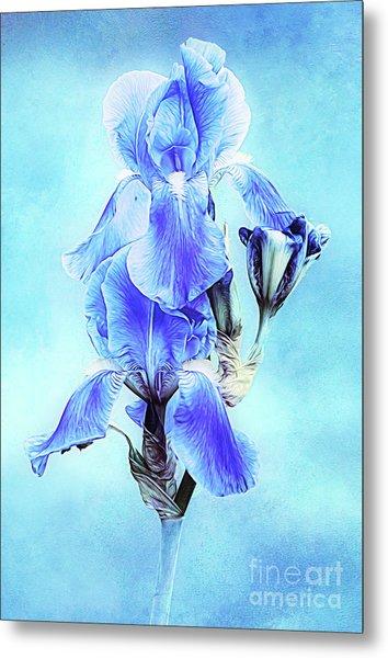 Iris Pair In Blue Metal Print