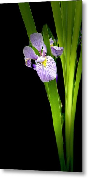 Metal Print featuring the photograph Iris Via Iphone by Onyonet  Photo Studios