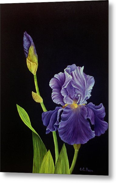 Iris With Purple Ruffles Metal Print