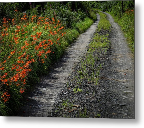 Metal Print featuring the photograph Irish Country Road Lined With Wildflowers by James Truett