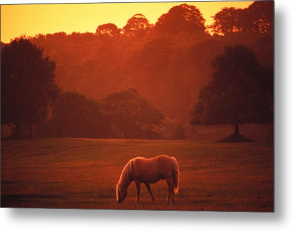 Irish Horse In Gloaming Metal Print by Carl Purcell