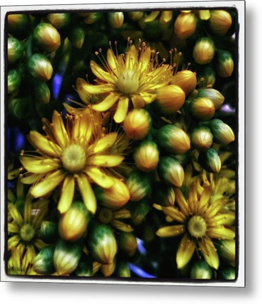 Metal Print featuring the photograph Irish Rose. Also Known As Pinwheel by Mr Photojimsf