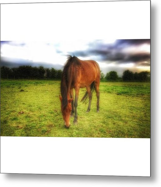Isabellashores.com #horse #equine Metal Print