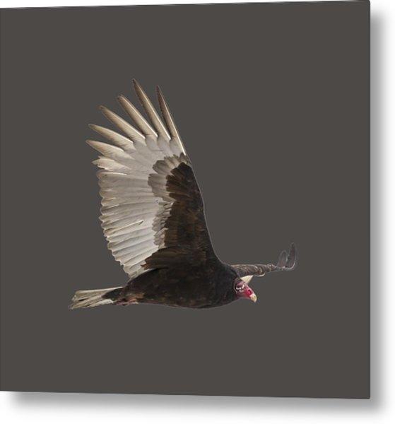 Isolated Turkey Vulture 2014-1 Metal Print