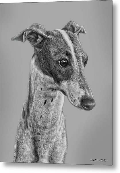 Italian Grayhound 2 Metal Print